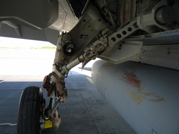 Srážka JAS-39 Gripen se zajícem při přistání