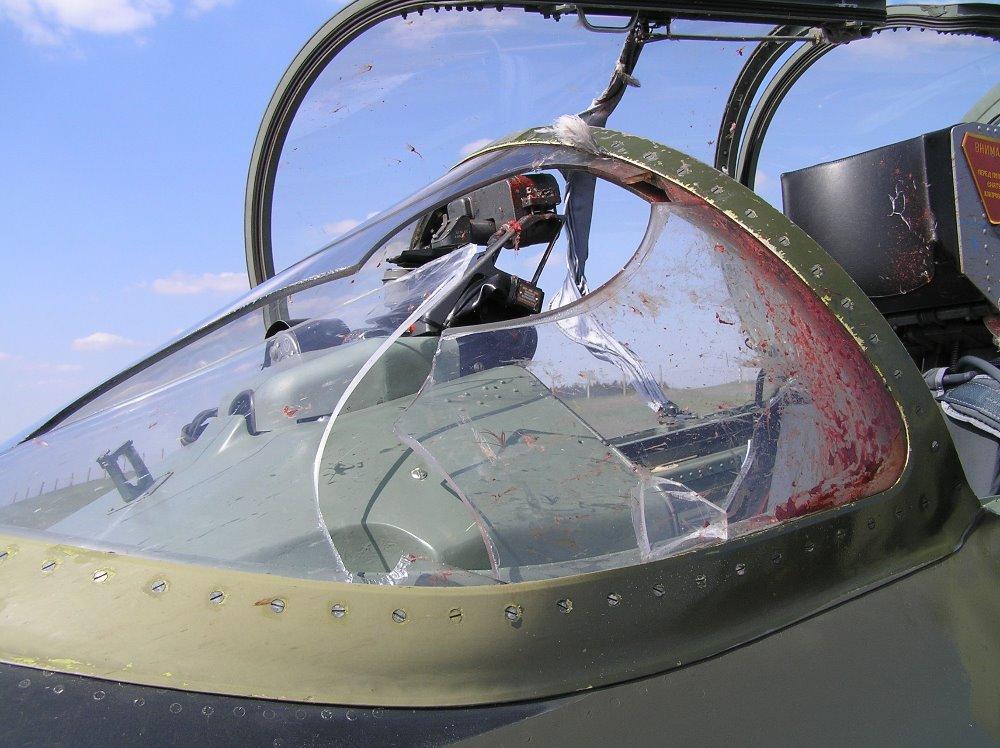 Foto: V tomto případě pták narazil do kokpitu L-39. / 21. z.TL